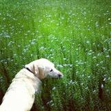 Eddie in the cornfield.